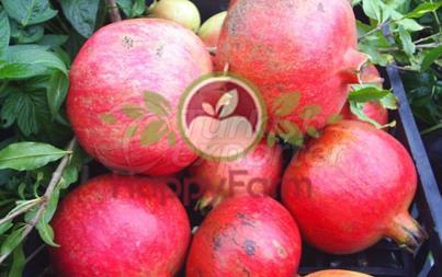 Pomegranate Deve Disi