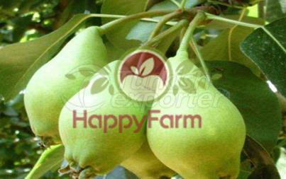 Pear Akca