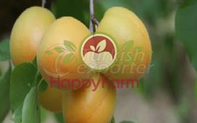 Apricot Igdir Salak