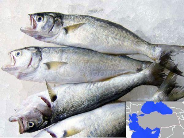 Fresh Cooled Bluefish