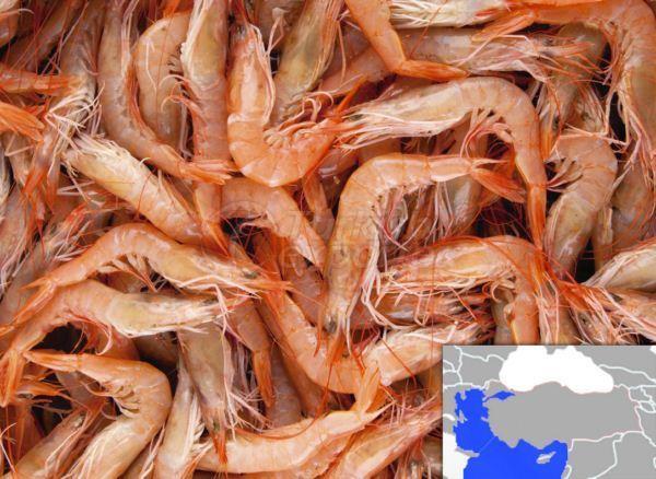 Frozen Natural Shrimp