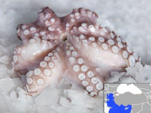 Fresh Cooled Octopus