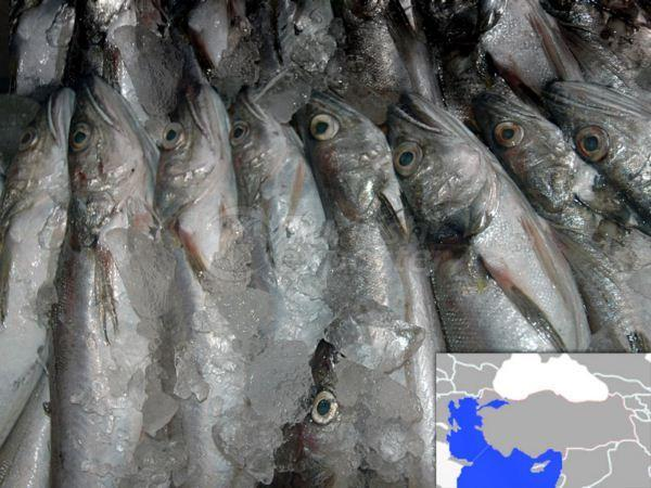 Frozen Whiting