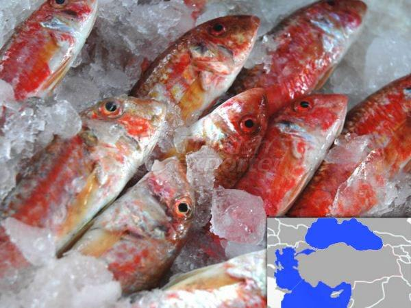 Fresh Cooled Red Mullet