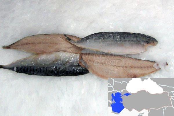 Fillet Mackerel