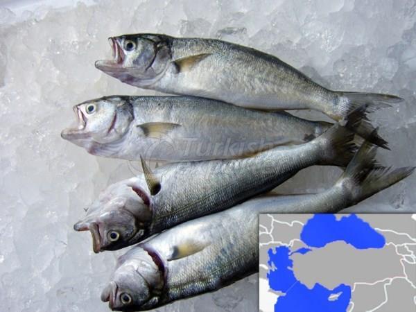 Frozen Bluefish