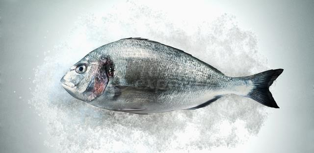 Sea Bream Fresh