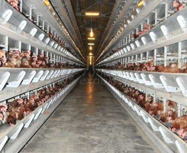 Egg Production Facilities