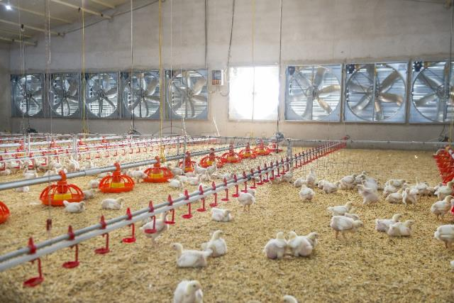 Poultry House Equipments