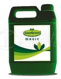 EVERGREEN MAGİC