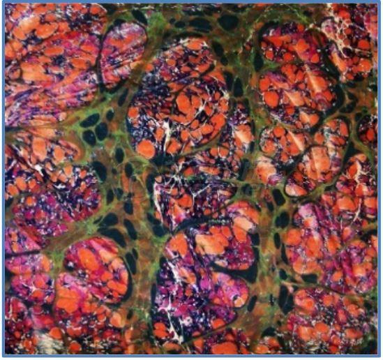 Sateen-Silk Scarves 011
