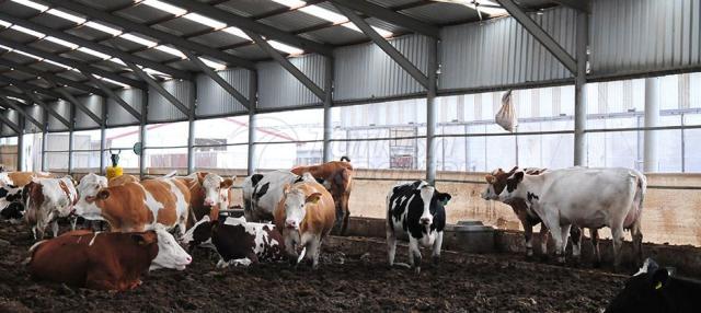 Animal Production