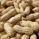 We Sell Peanuts  700.000 ton Available